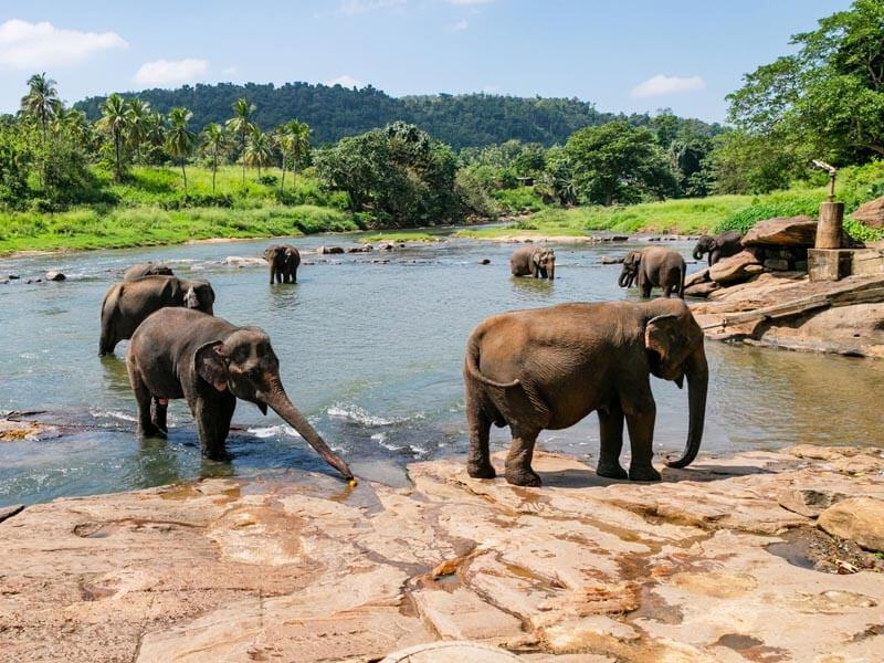 Tour in Pinnawala & Kandy