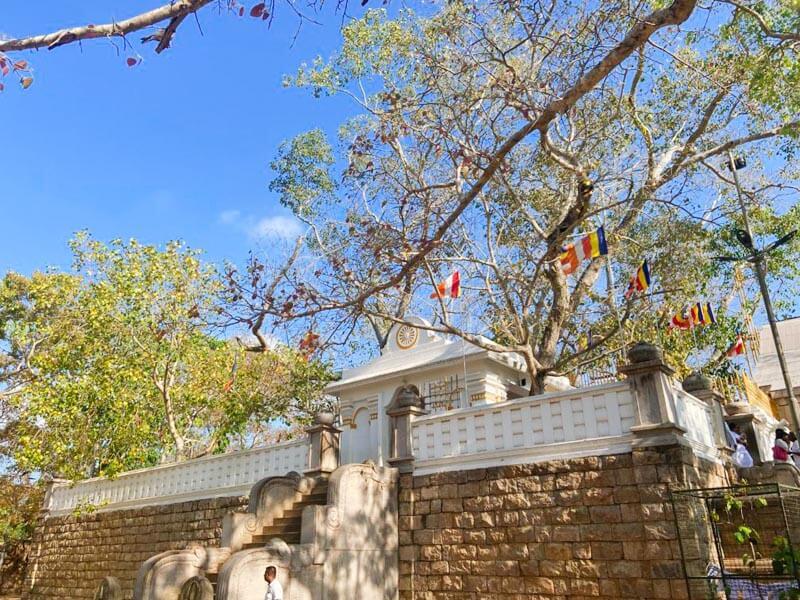 Sirimahabodhi Tree