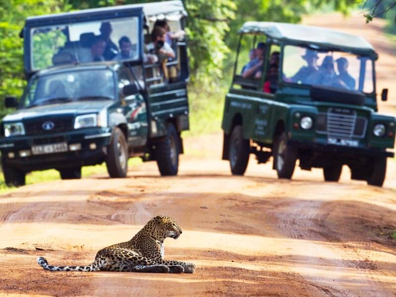 Yala Jeep Safari Tour
